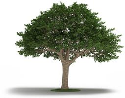 3d tree  neem tree