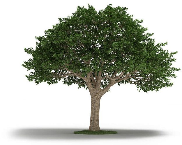 Tree neem tree 3d cgtrader - Tree images free download ...