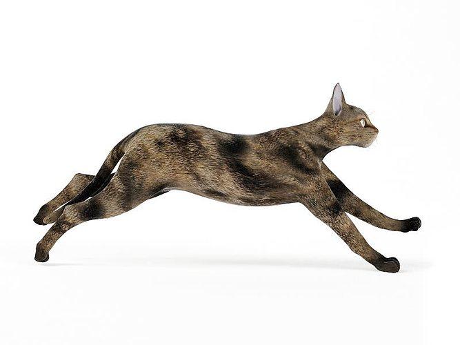 black and brown cat 3d model obj mtl 1