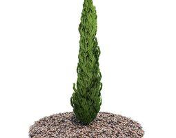 3D model Evergreen Planted Tree