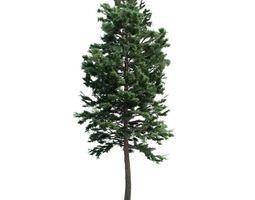 Tall Green Tree Pine 3D model
