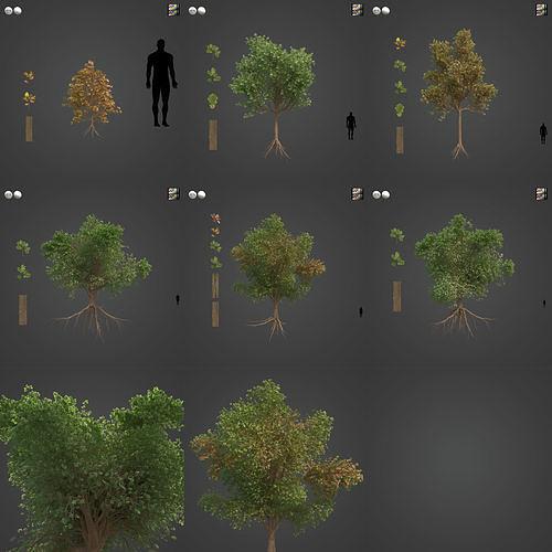 2021 PBR Downy Oak Collection - Quercus Pubescens