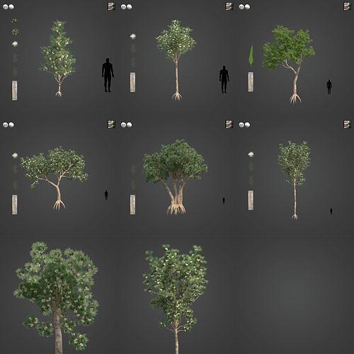 2021 PBR River Redgum Collection - Eucalyptus Camaldulensis
