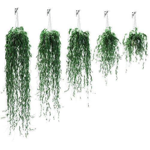 Hanging plants in pots - 5 models