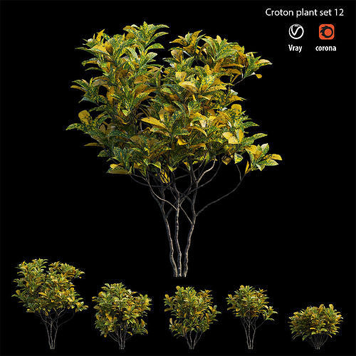 Croton plant set 12