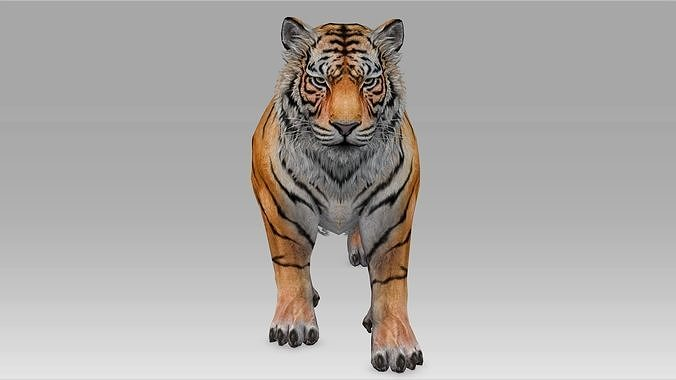 Tiger Realistic Character with motion