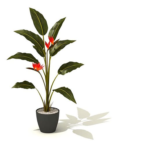 Potted Green Tall Plant With Red Flowers 3D Model