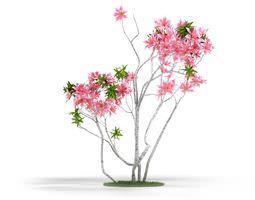 3D Pink Flowering Plant