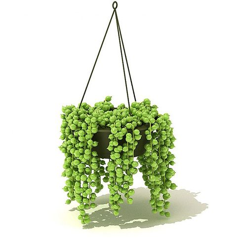 Green Hanging Plant 3d Model Cgtrader