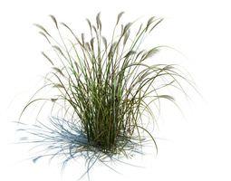3D High Green Grass