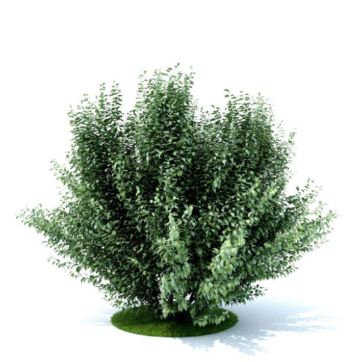 3d Dark Green Bush Cgtrader