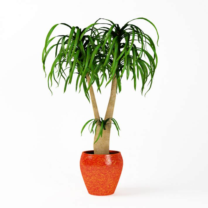3D model Plant Indoor Potted Plant | CGTrader