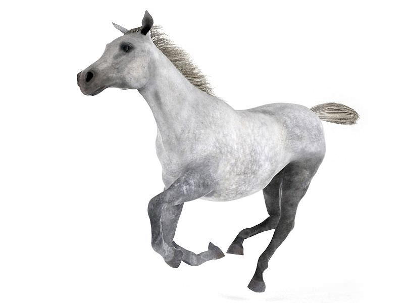 White And Grey Horse 3d Model Obj 1