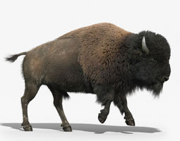 Bison FUR ANIMATED 3D Model
