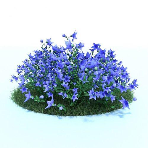 3d model bush with blue flowers in full bloom cgtrader for Blue flowering bush