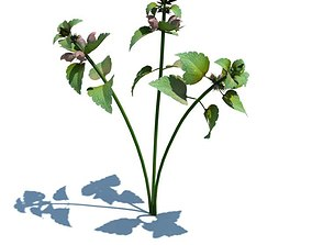 Lamium Purpureum Plant 3D model