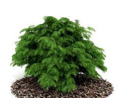 leafy green shrub 3d model
