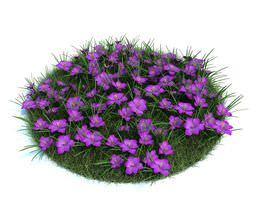 3D model Beautifully Purple Crocuses
