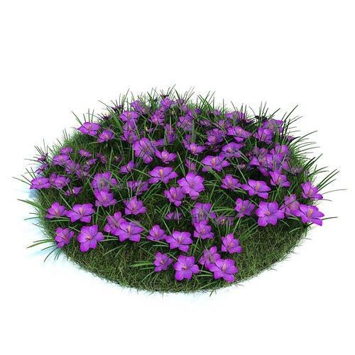 beautifully purple crocuses 3d model obj mtl 1