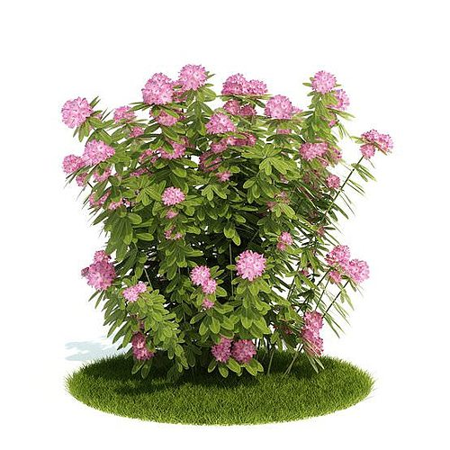 Pink Flowering Bush 3d Cgtrader