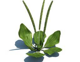 green aquatic plant 3d model