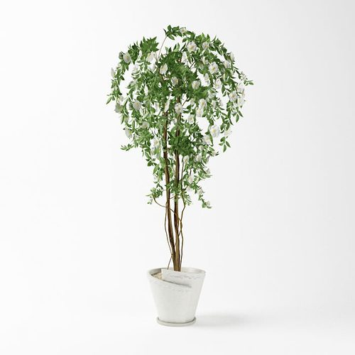 Green Potted Plant Leaf 3d Cgtrader