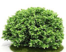 Green Leafed Bush 3D model