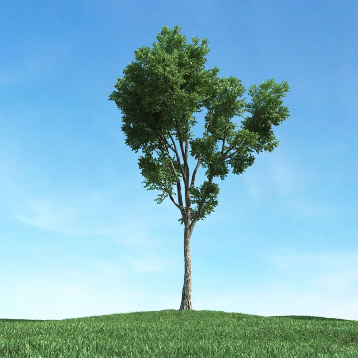 Tall Tree With Long Trunk 3d Model Obj Cgtrader Com