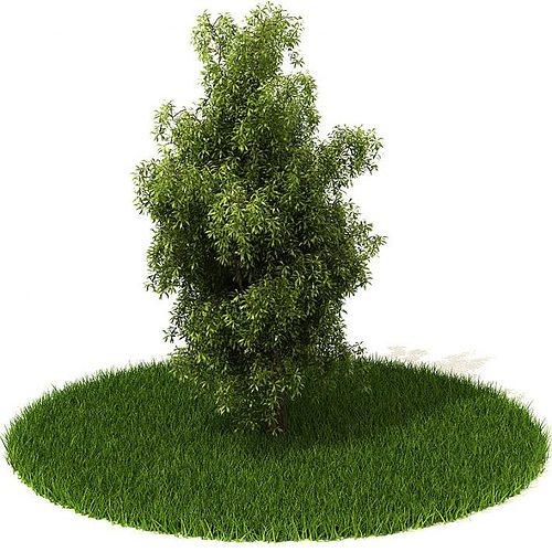green bushy plant 3d model obj mtl 1