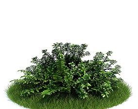 3D Green Bush