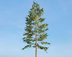 Tree Green Pine 3D
