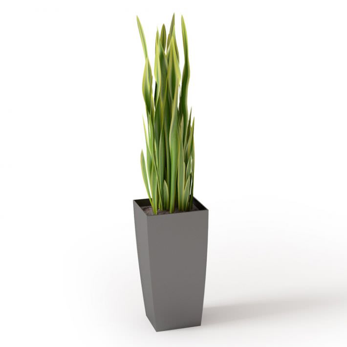 Green Square House Plant 3d Model Cgtrader