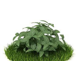 green shrub plant 3d