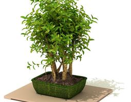 Green Potted Tree For Decoration 3D model