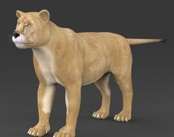 Realistic Lioness 3D Model