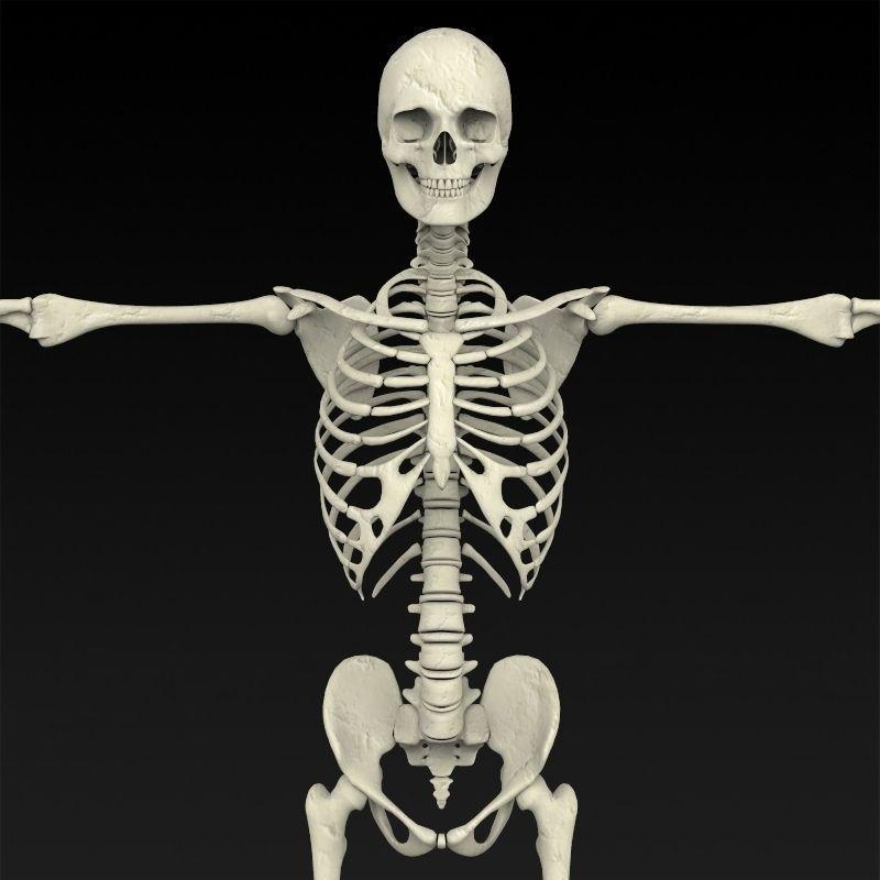 Как сделать скелет человека