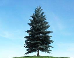 3D Tall Dark Green Conifer Tree
