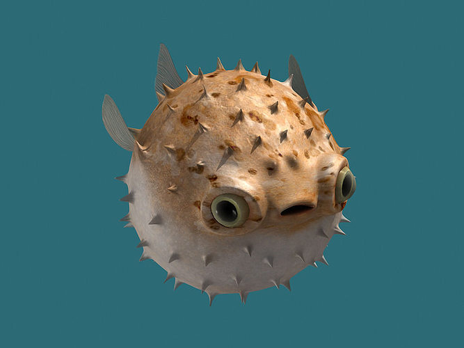 puffer fish animated 3d asset cgtrader