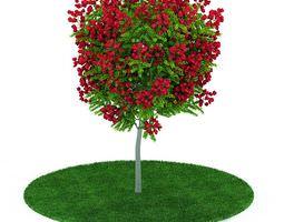 Ornamental Garden Plant 3D