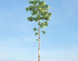 3D model Tall Green Tree With White Trunk