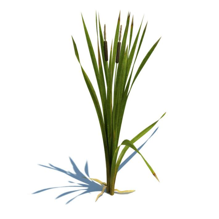 Green Leafy Plant With Cat Tails 3d Cgtrader