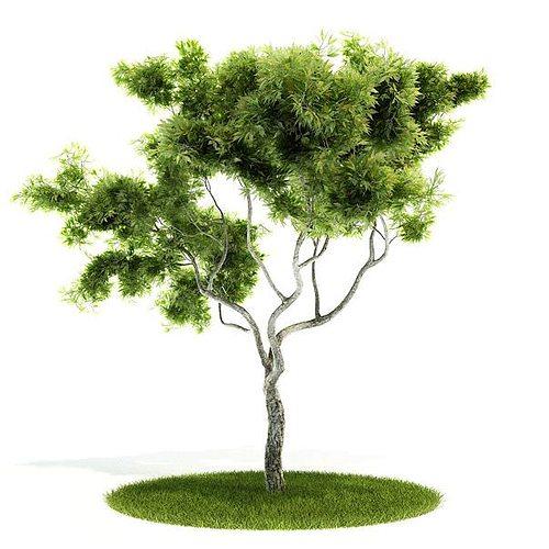 large bonsai tree 3d model  1