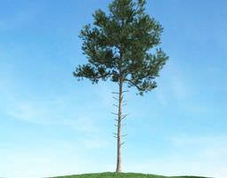 3D model High Branch Pine Tree