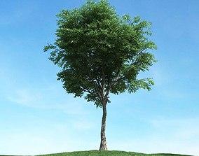 3D model green Green Leaved Plant