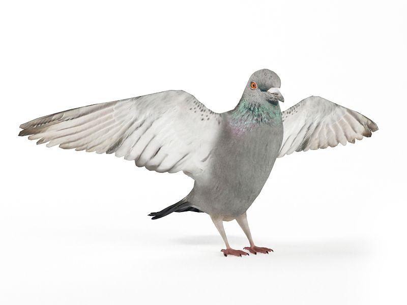 Bird 3D Models - #2 | CGTrader.com