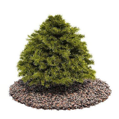 top pin tree of - photo #20