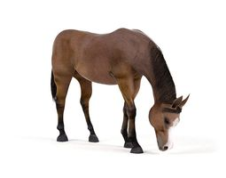 3d horse brown