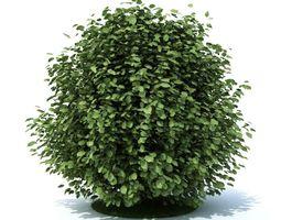 green leaf shrub 3d model