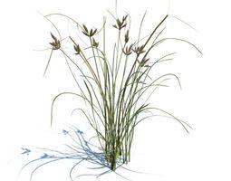 Grass other 3D model
