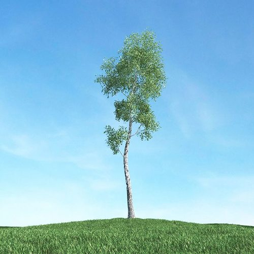 thin leaf tree 3d model obj mtl 1